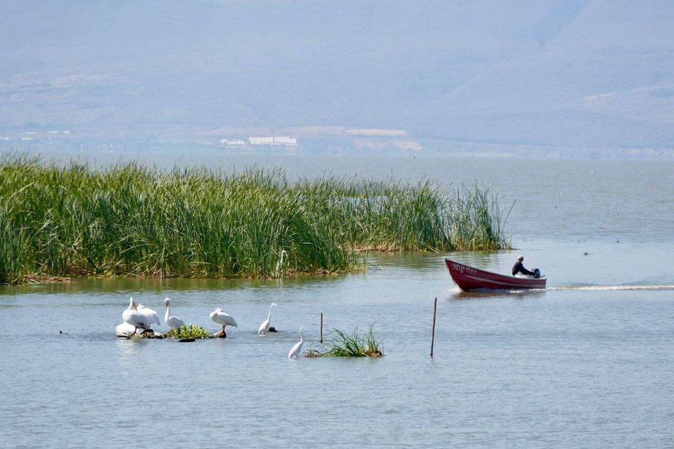 Beauty In Nature Day Fisheman Fishing Boat Lake Mode Of Transport Nature Nautical Vessel No People Outdoors Sky Transportation Water White Pelicans