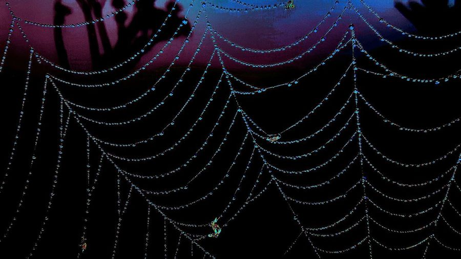 Spiderparty Spiderfest