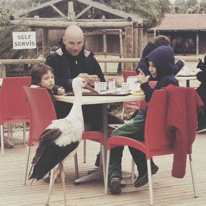 Animals Nature_collection Relaxing Bird Hello World Iyi Akşamlar.... Turkey Izmir Izmirlife ızmir