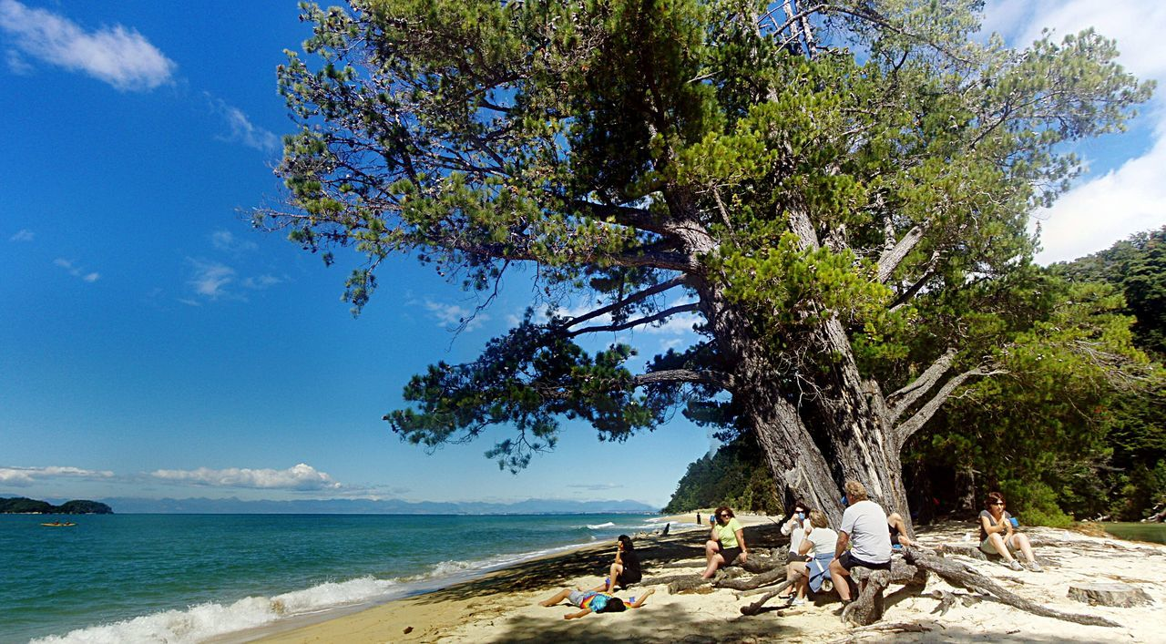 Tree Beach A four day walking trip through the Abel Tasman National Park New Zealand New Zealand Scenery Feet Hurting Summer Views Blue Wave Colour Of Life