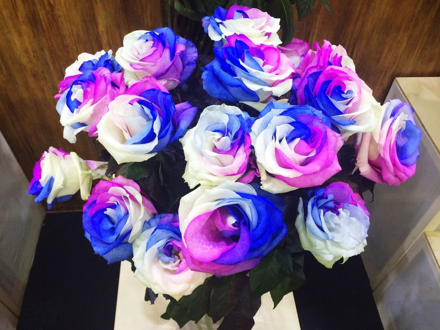 colorful ! Colorful Flower Roses Rose - Flower