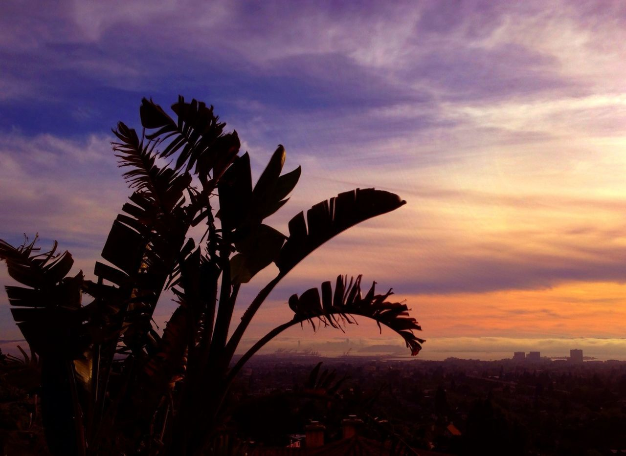 Silhouette palm trees against scenic sky