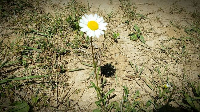 The world could be ugly, but you are beautiful Daisy Flower Life Alone Revival Beauty In Nature