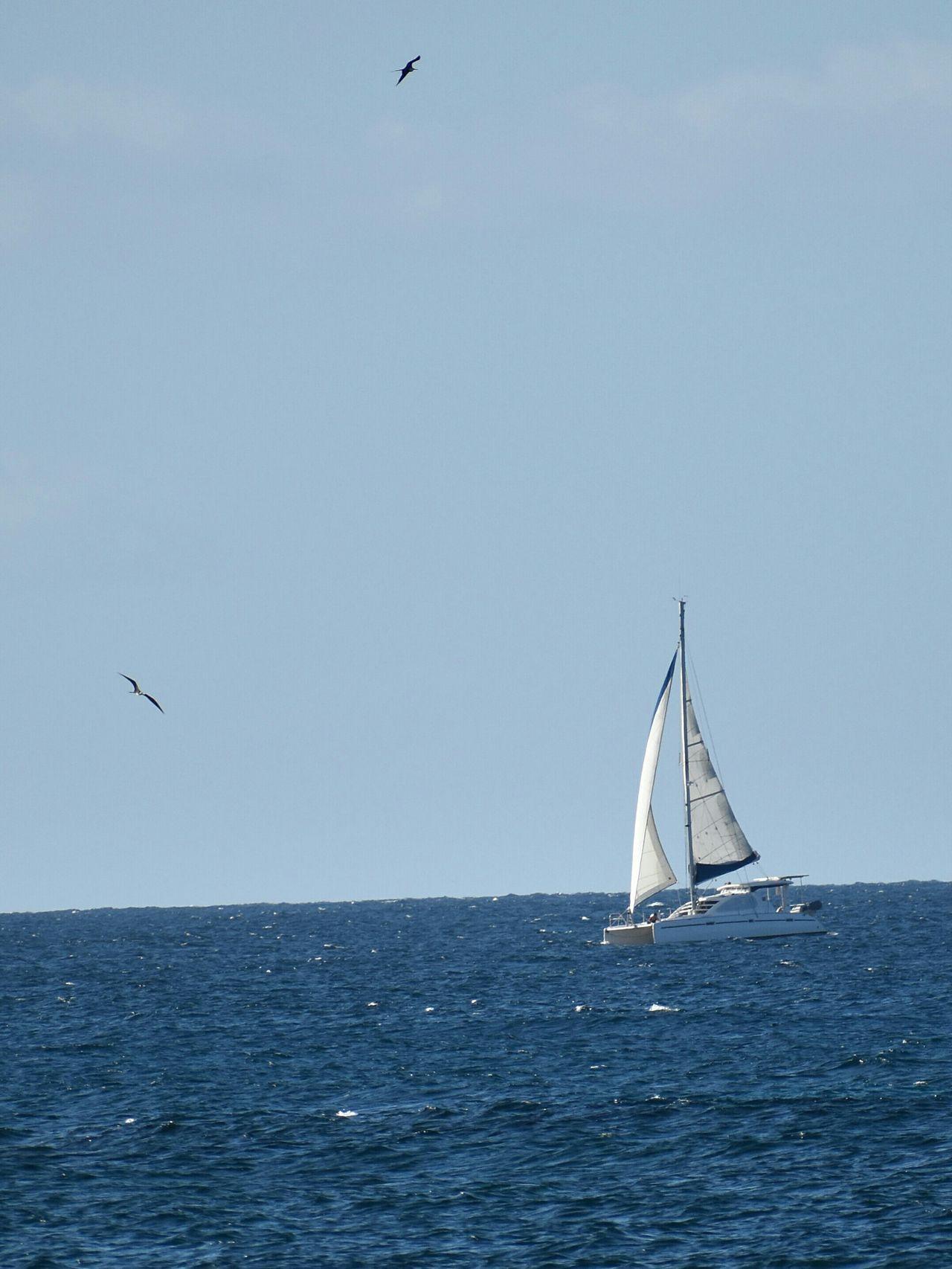 Nautical Vessel Sailboat Sailing Sea Blue Transportation Sky Outdoors Sailing Ship Bird Vacations Day No People Water Wave Yacht Yachting