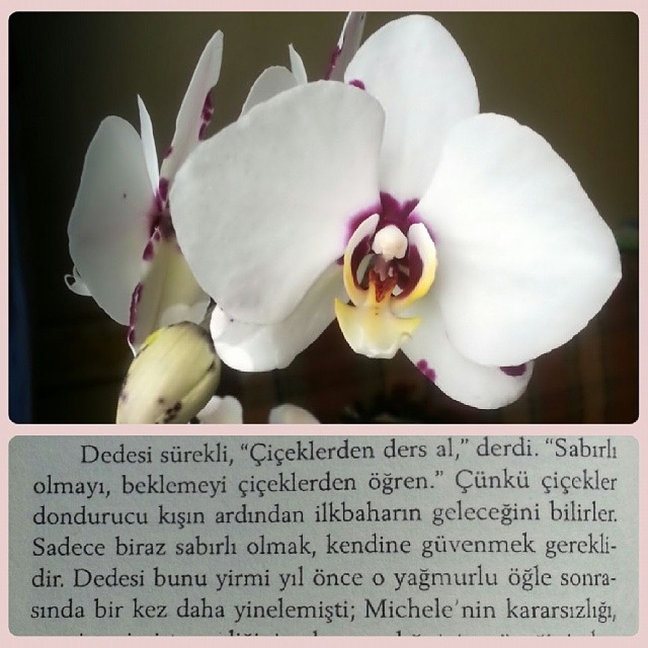 Ciceklerden ders al! çiçek Kitap Orkide Flower Instaflower Book Istanbulkirmizisi Kitapkurdu Nature Reading Beautiful Orkide Okumak Aniyakala Popular Turkishbloggers Turkishfollowers Orchids Books Instagramturkiye Instaturk Nature