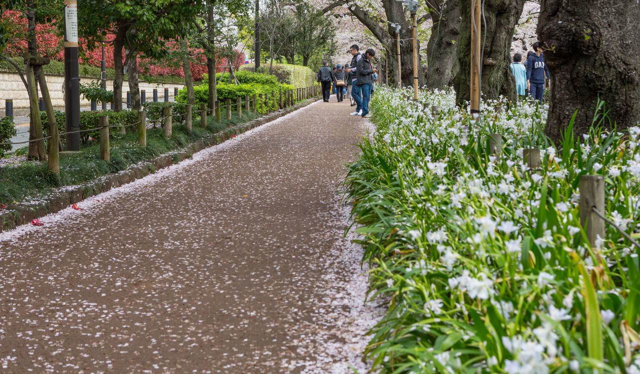 walking, incidental people, tree, outdoors, the way forward, men, day, senior adult, plant, real people, growth, lifestyles, people, nature, adult, full length, flower, grass, one person, adults only