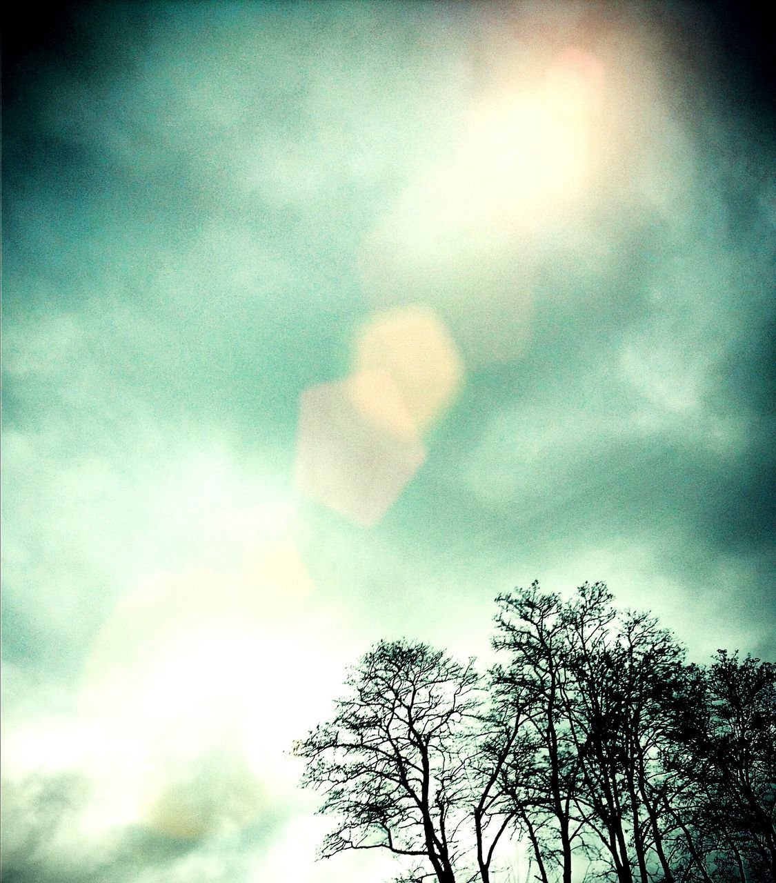 sky, low angle view, tree, cloud - sky, outdoors, day, nature, no people, beauty in nature