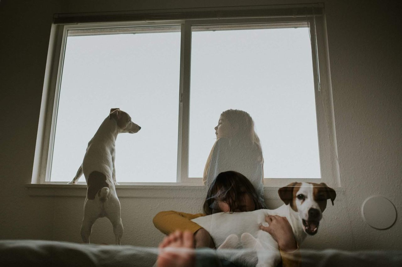 Best friends double exposure. Indoors  Sitting Home Interior Relaxation Window Dog Pets Lifestyles Young Women Full Length Living Room Young Adult Domestic Animals Men Playing Domestic Life Friendship Day Togetherness Mammal