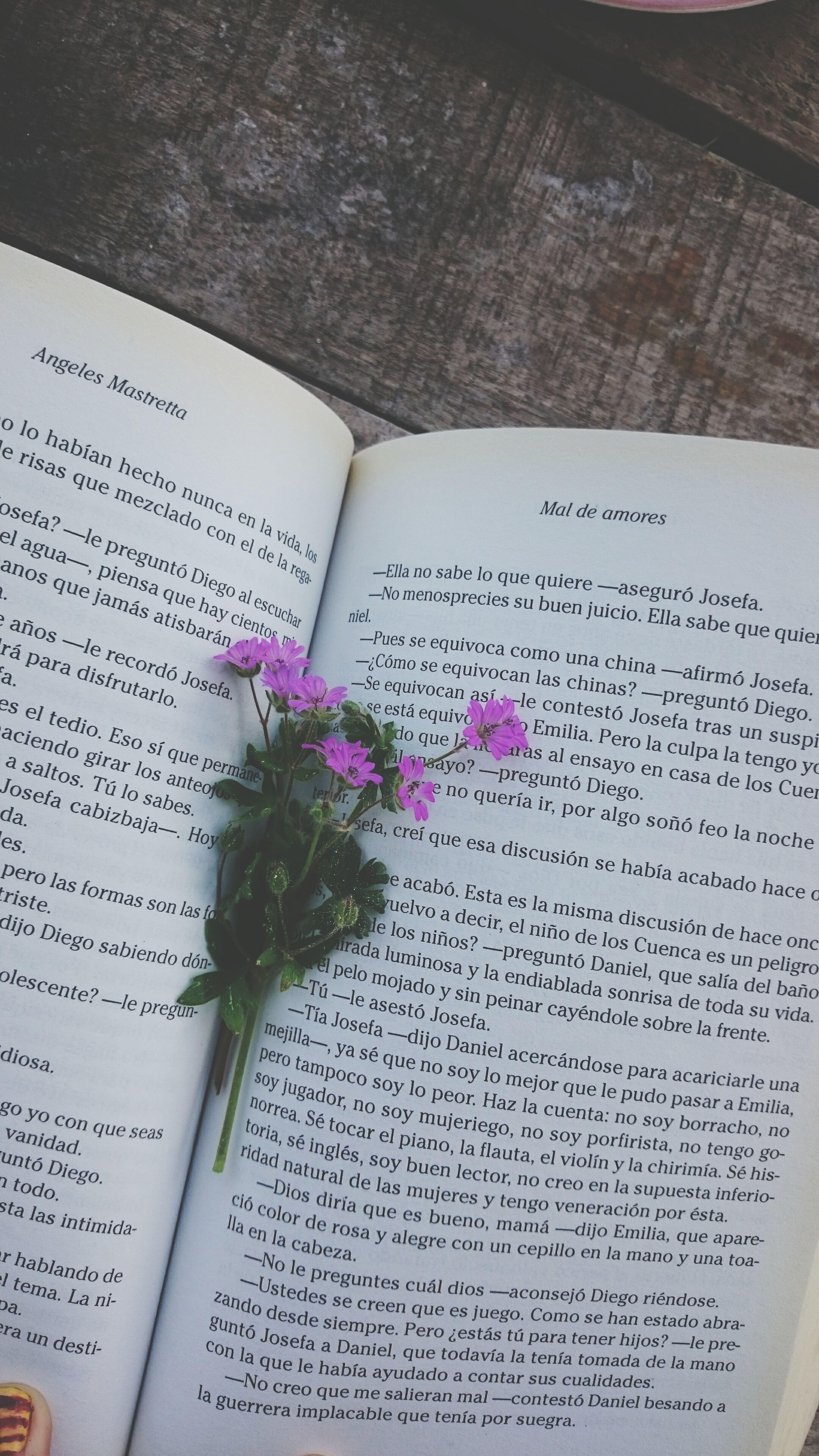 Welcomespring Spring Flowers Book Niceday Lovesprig Sun Chilling