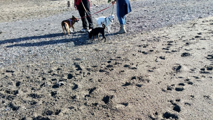 Who's in Control Here?! Dogs Three Multiple Walking Leashes Couple Man Women Serene Zen Peaceful Beach Casual Rewilding Leisure Tranquil Scene Copy Space Sand Tangled Cuteness Meditation Fun Distance Dog Pets Low Section Domestic Animals Shadow Animal Themes Sand
