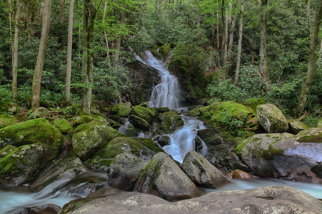 Beauty Beauty In Nature Day Environmental Conservation Forest Freshness Green Color Growth Idyllic Landscape Lush - Description Lush Foliage Nature No People Outdoors Scenics Smoky Mountain National Park Smoky Mountains Smooth Waterfall Tranquility Tree Water Waterfall