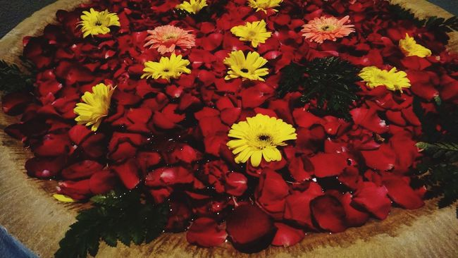 Barista Bari Flowers Asian  Beautiful