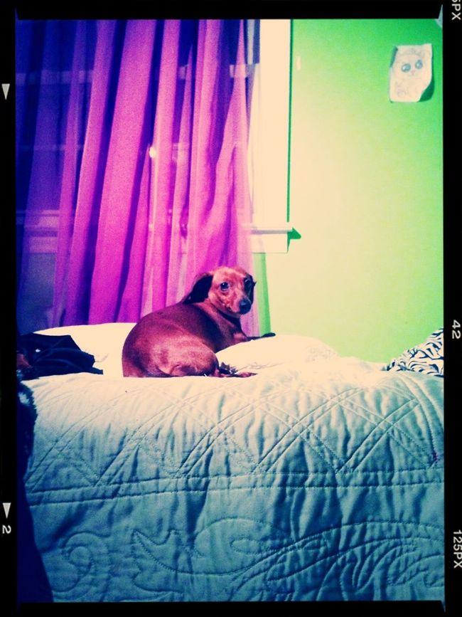 Love My Doggy <3