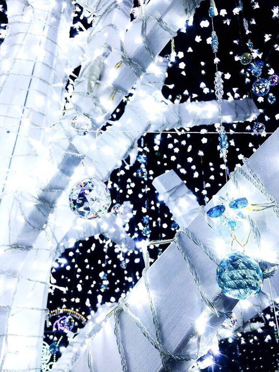 ホワイトイルミネーション 足利 フラワーパーク イルミネーション