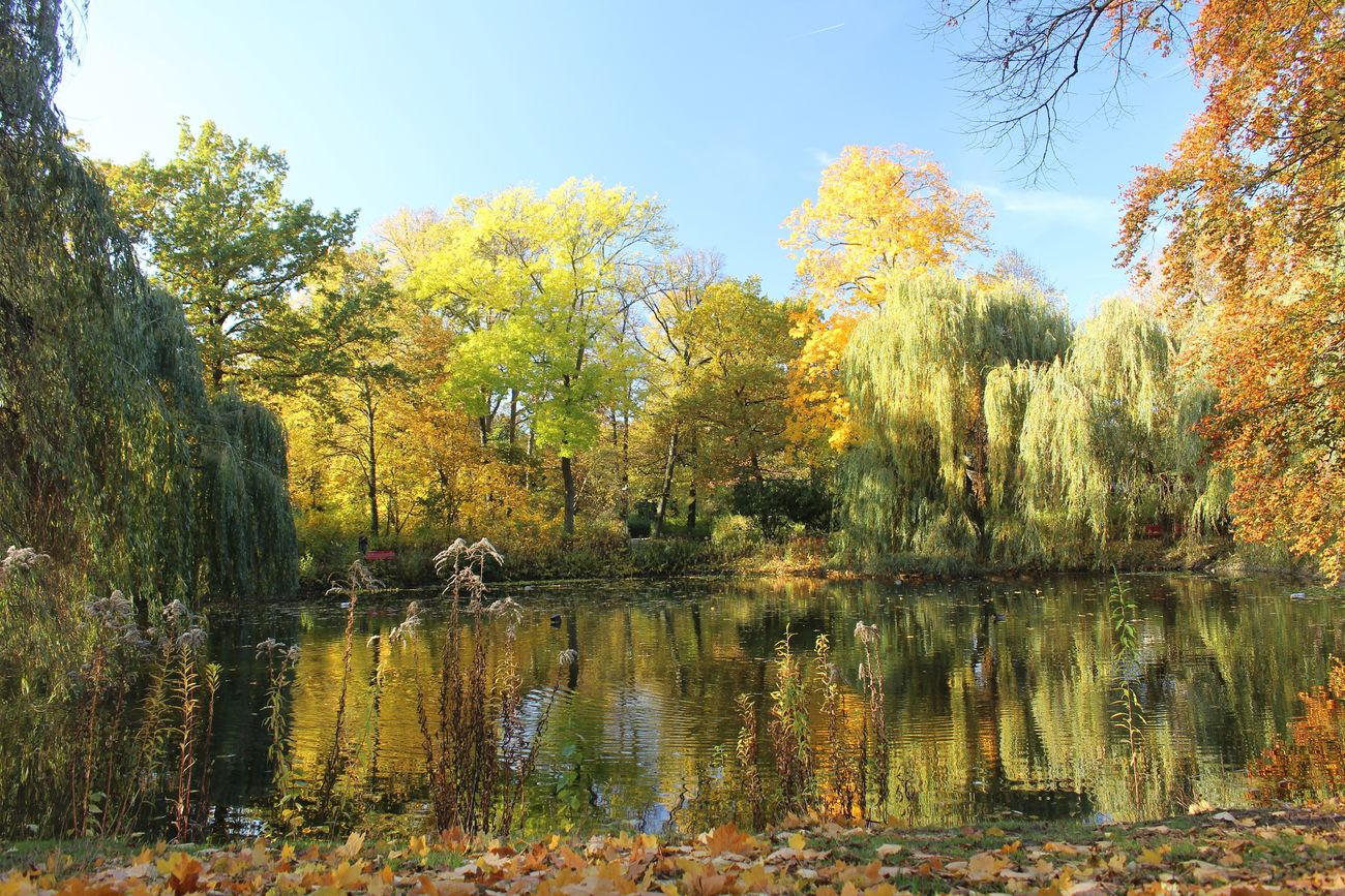 Autumn Autumn Colours Autumn Leaves Autumnday Autumn Light Water Tree Reflection Nature No People Day Outdoors Beauty In Nature Berlin Photography Picsartrefugees Berlin