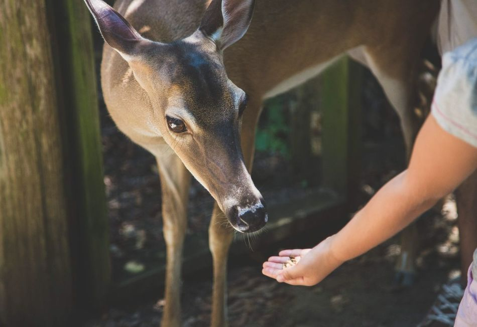 Beautiful stock photos of deer, Animal Themes, Animals In The Wild, Cropped, Day