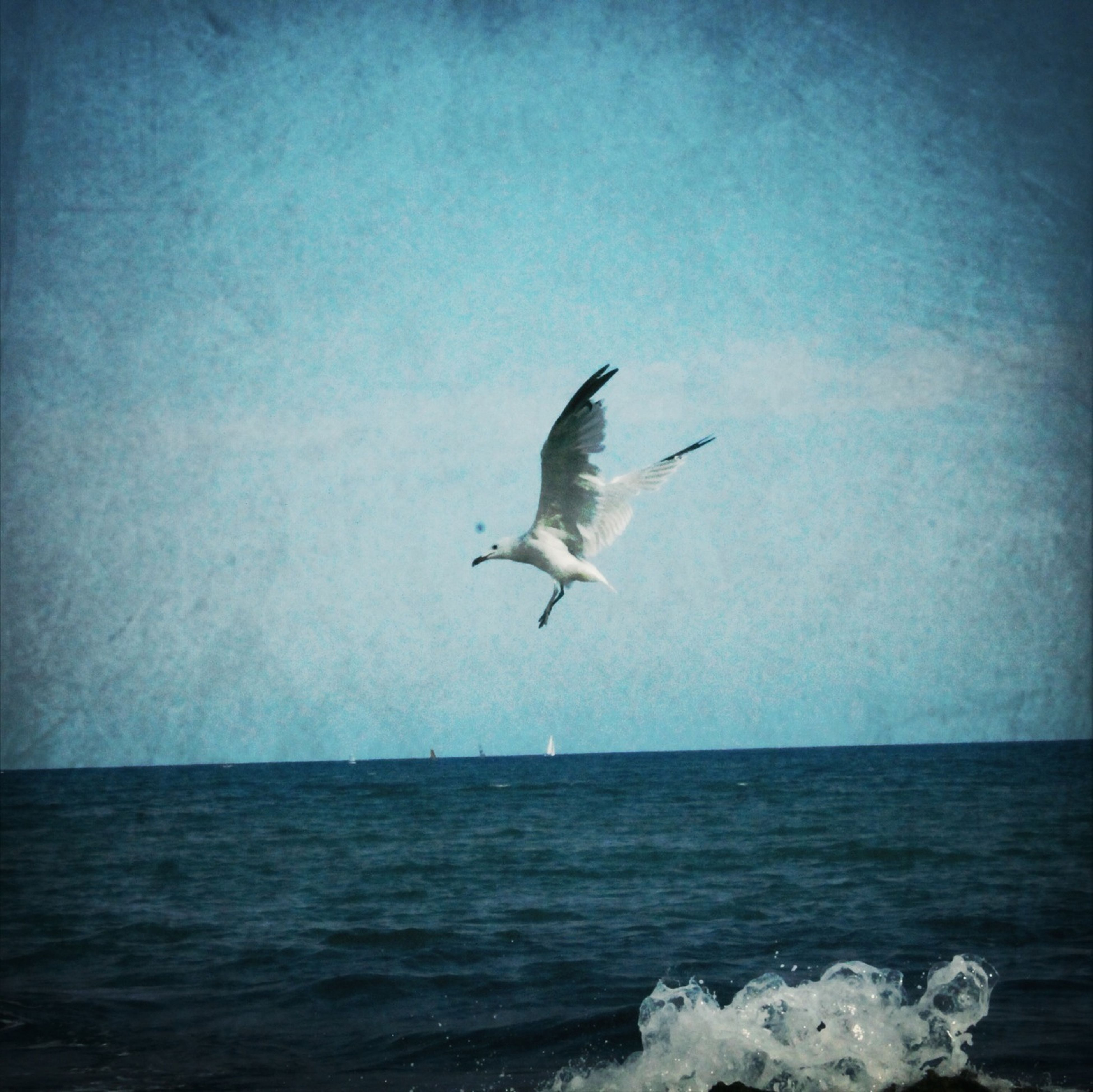 bird, flying, animal themes, animals in the wild, sea, spread wings, seagull, wildlife, water, one animal, waterfront, horizon over water, nature, mid-air, sky, beauty in nature, motion, scenics, tranquil scene, tranquility