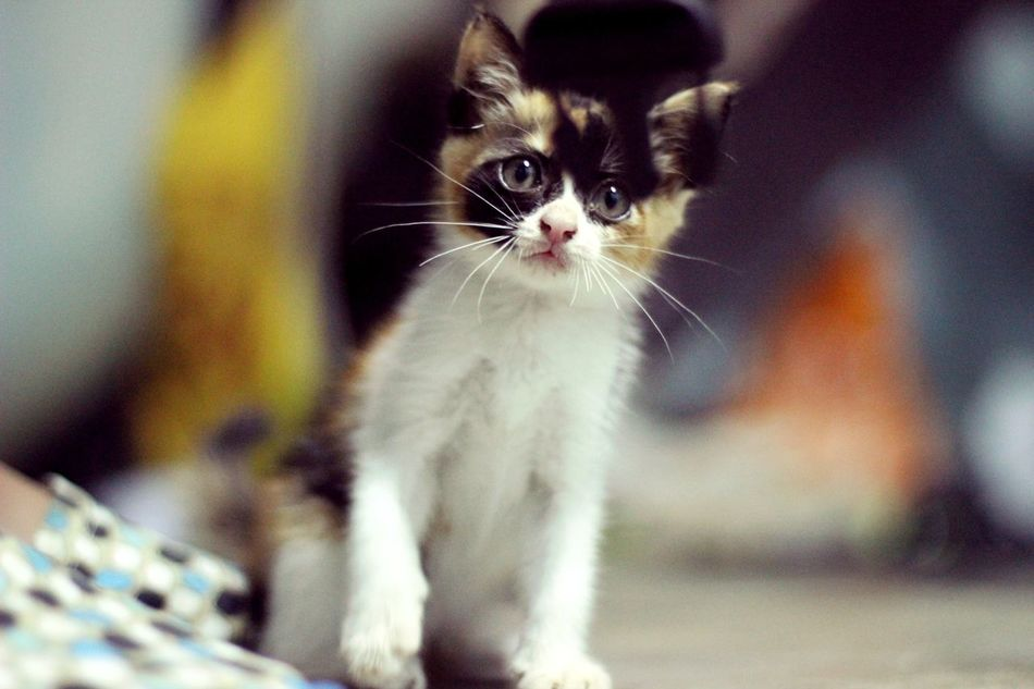 Beautiful stock photos of cute, Animal Themes, Close-Up, Cute, Day