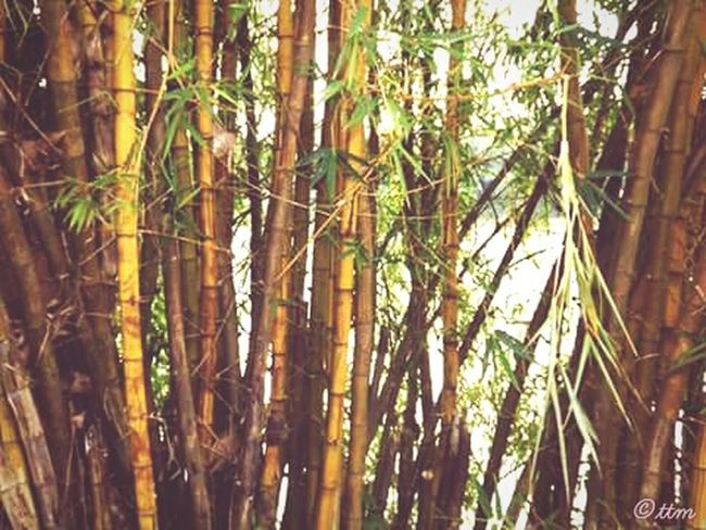 Bamboo Tree... Natural Beauty! Riverside Eyeem India - Kerala (god's Own Country )