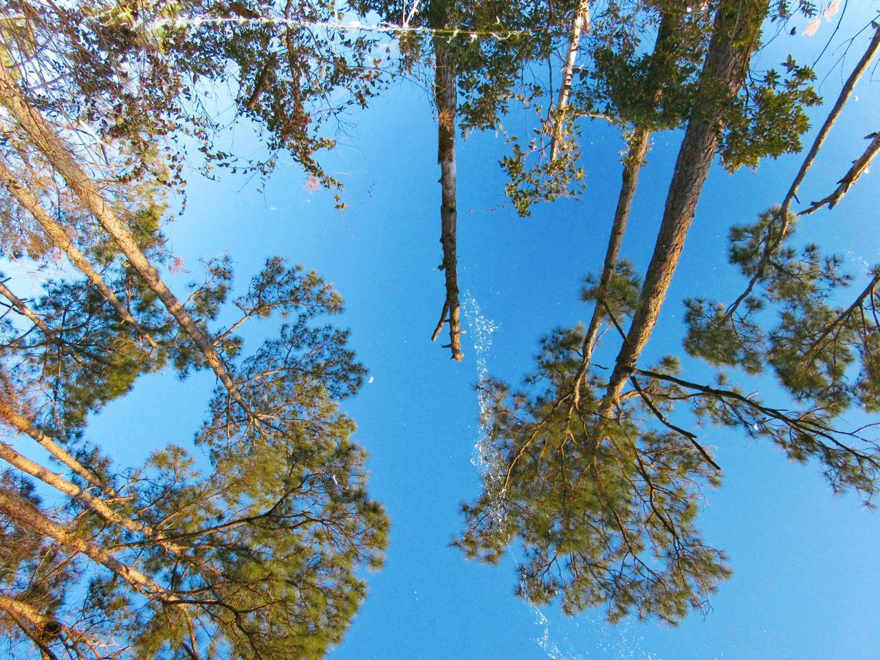 Which way is up? It all depends upon your perspective. The reflections of the landscape in the still waters of the lake in Audubon Bird Sanctuary were so clear it was disorienting at times to stare into. •—• Tree Nature Clear Sky No People Outdoors Beauty In Nature Sky Reflection Reflections In The Water Reflection_collection Reflection Lake Reflections Reflect Perspective Perspectives Tranquility Tranquil Scene Tranquil Trees And Sky Trees Mirrored Mirror Effect Mirror Lake Lake Lake View