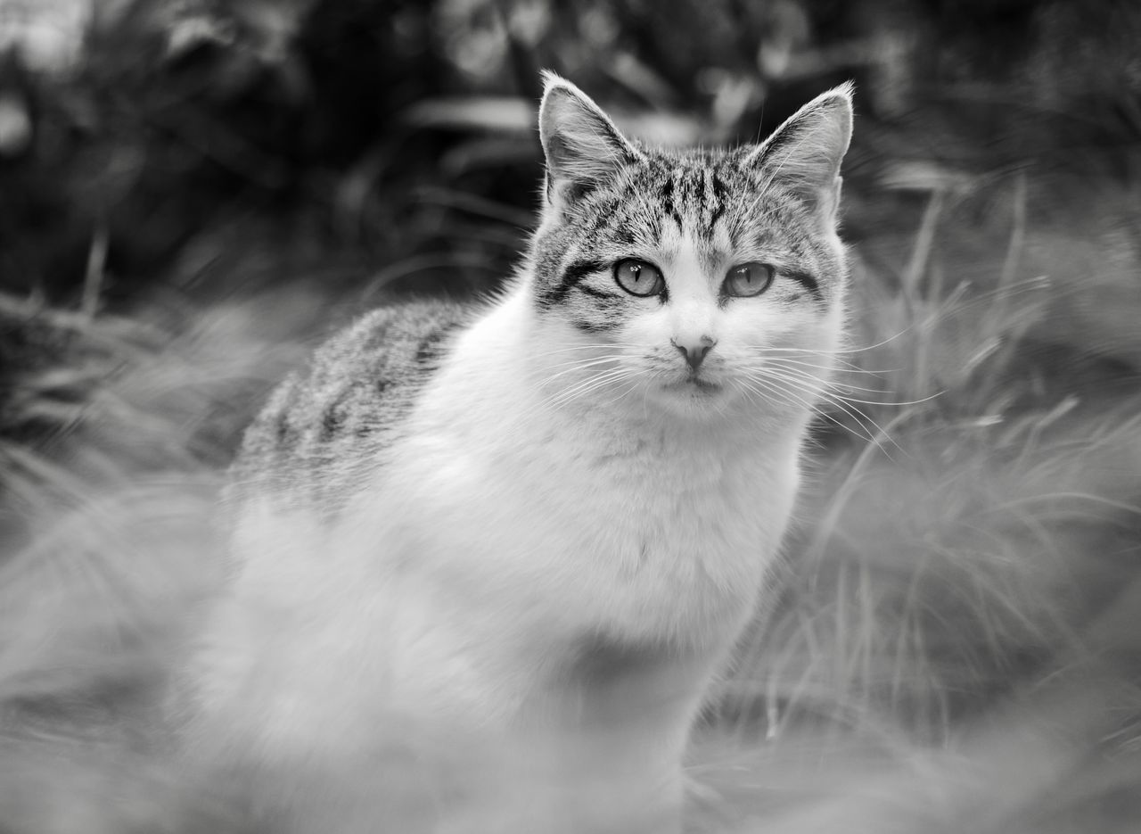 A cat hiding in the bushes Cat Cat Lovers One Animal Black And White Pet
