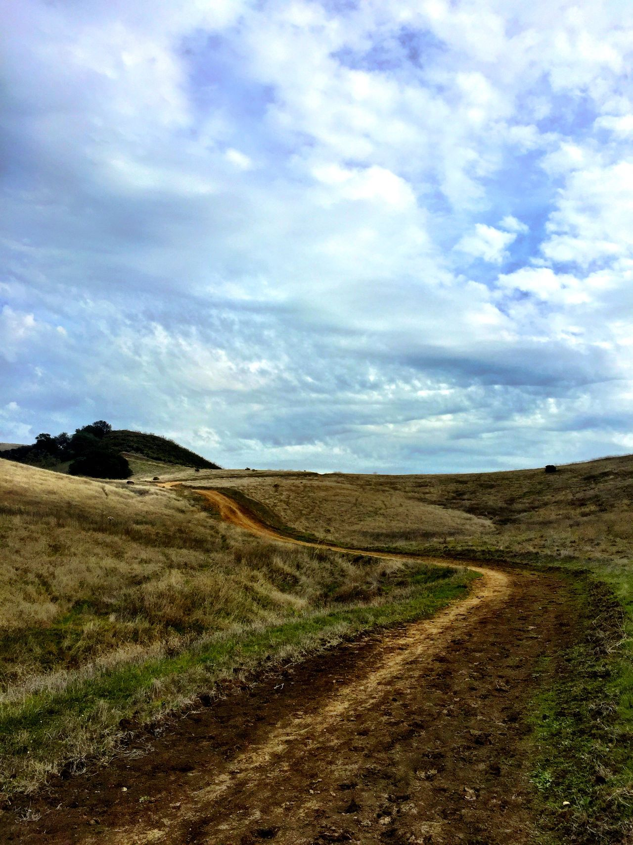 """""""The Road Less Traveled"""" A fire road utilized by horses, humans and mountain bikes, meanders through the Lime Ridge Open Space in Walnut Creek, California. Roads Backroads Openspace Exploring"""
