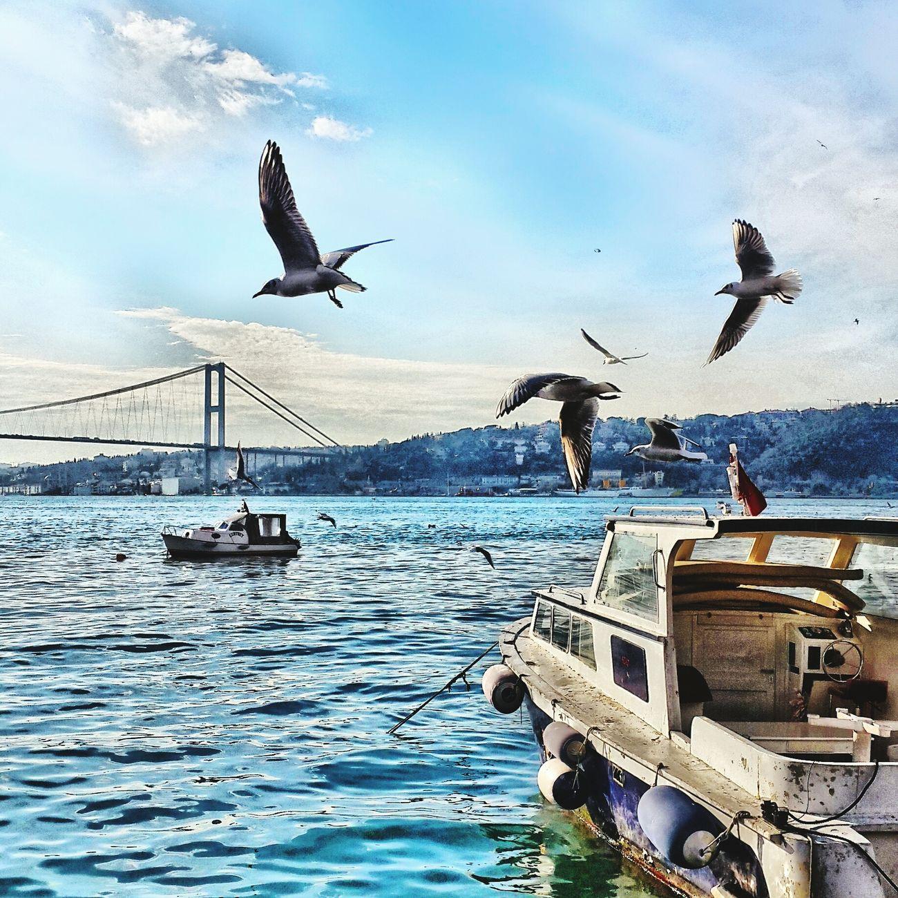 Turkishfollowers Vscodaily Instalove Hello World Instadaily Vscoonly Vscocamturkey Instamood Vscocam Vscoturkey Vscogrid Vscofilm Vscogood Instaphoto VSCO Fotografheryerde Instagood