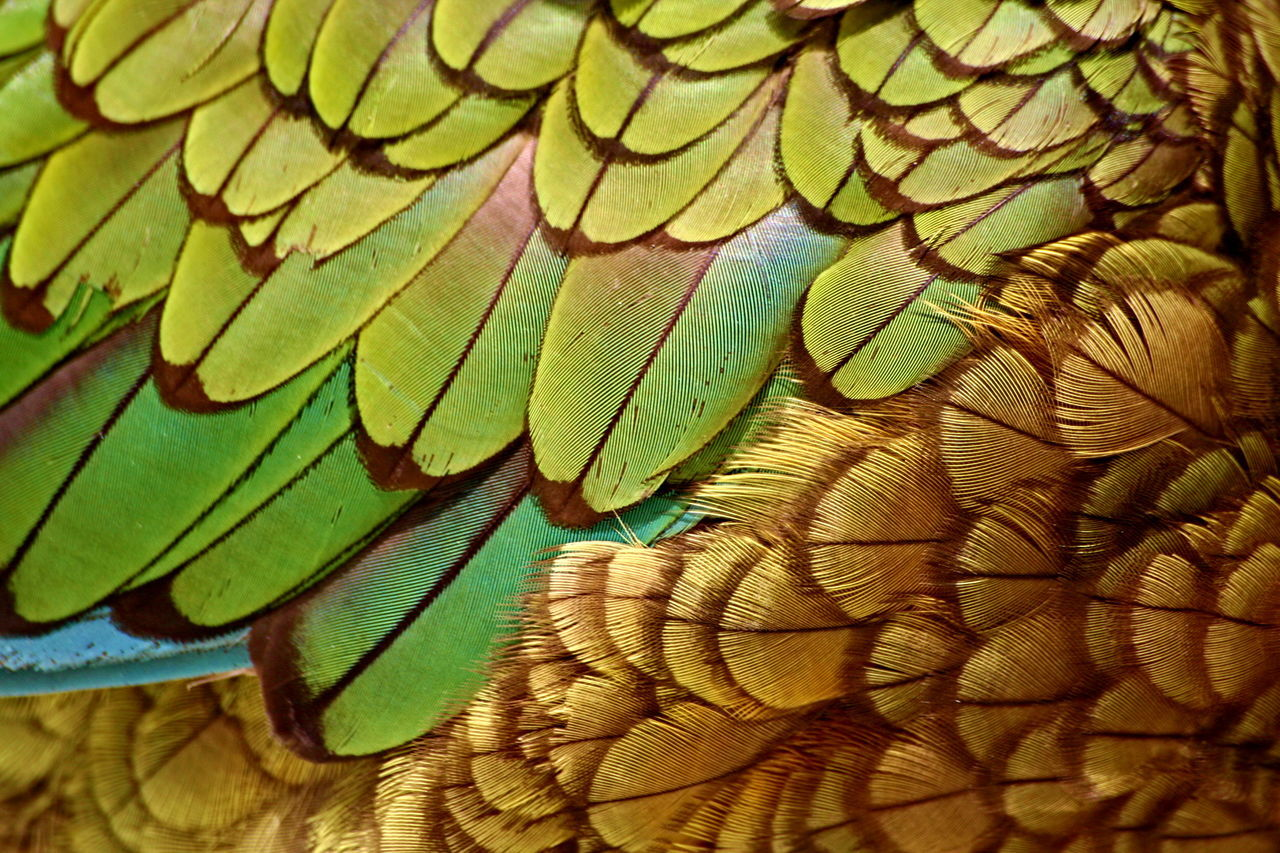 Animal Themes Backgrounds Beauty In Nature Bird Close-up Day Green Color Ke Nature Nestor Kea Nestor Kea (Nestor Notabilis) Nestor Notabilis New Zealand No People Parrot Kea Texture Fresh On Market 2016