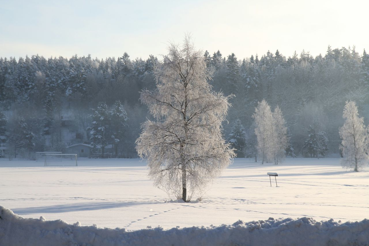 Deepfreeze Protecting Where We Play Landscape Hugging A Tree White AlbumWinter Nature Studies Of Whiteness Everyday Joy Snow