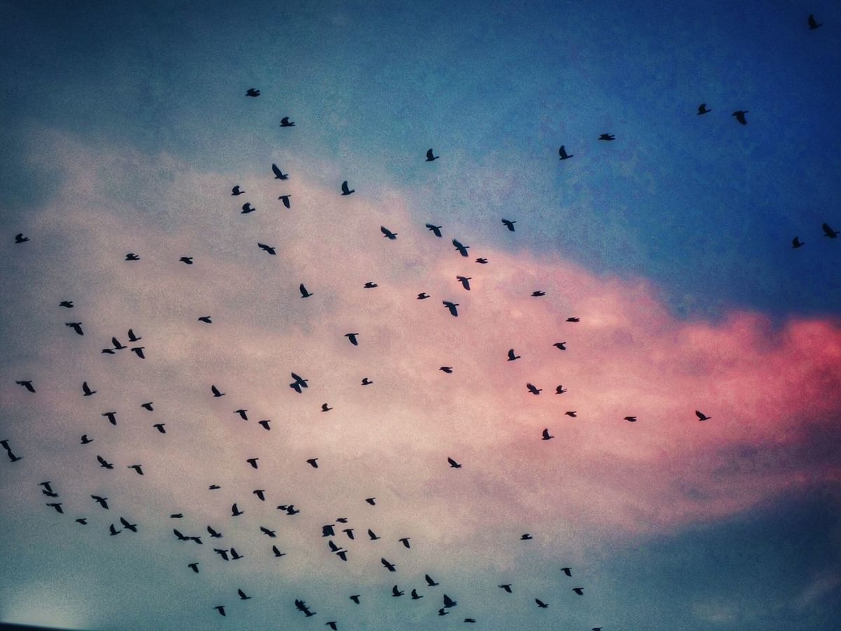 Traveling Home For The Holidays Heading Home Winter Home Flock Of Birds Flying South Sky And Clouds