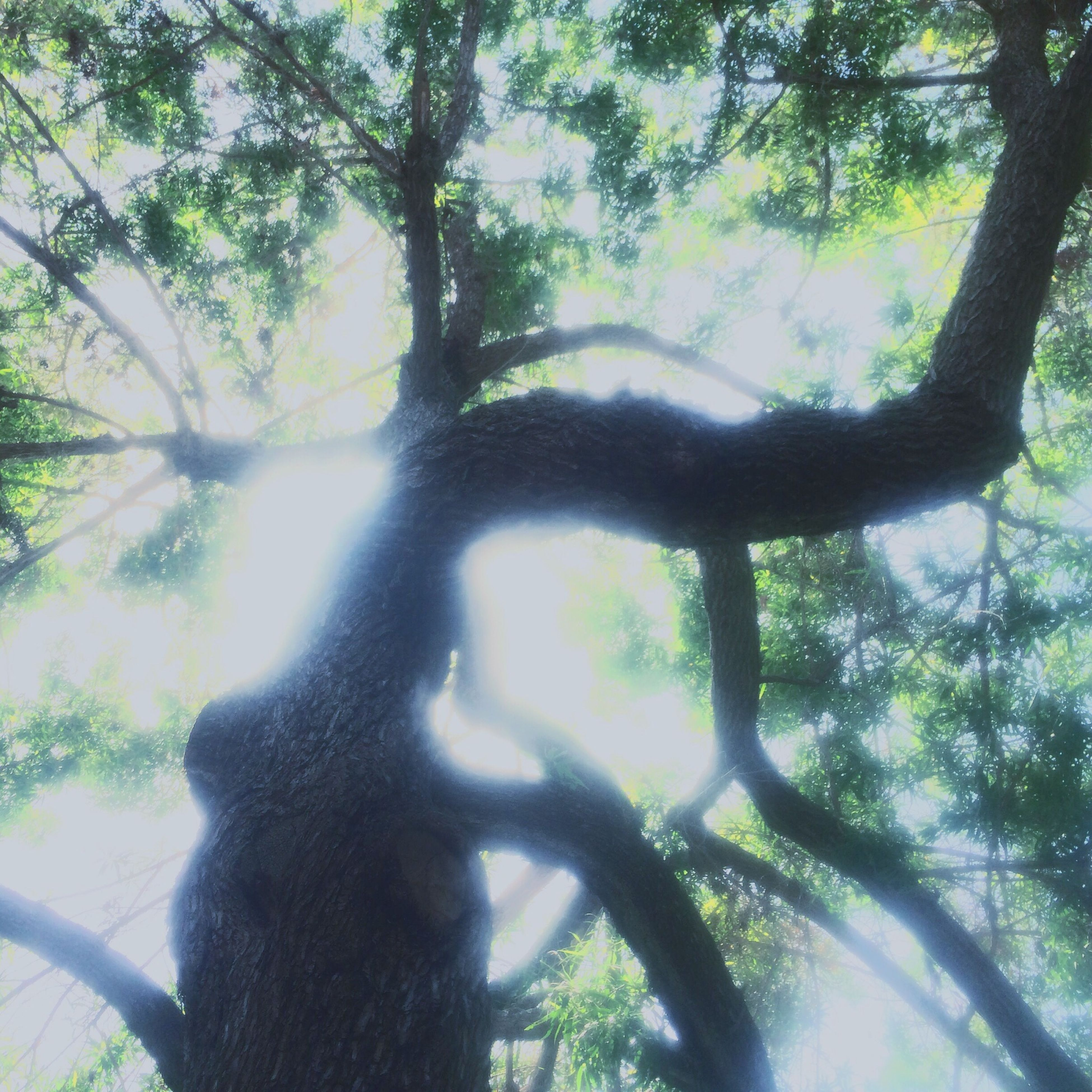 Tree Branches Light Sunshine Nature
