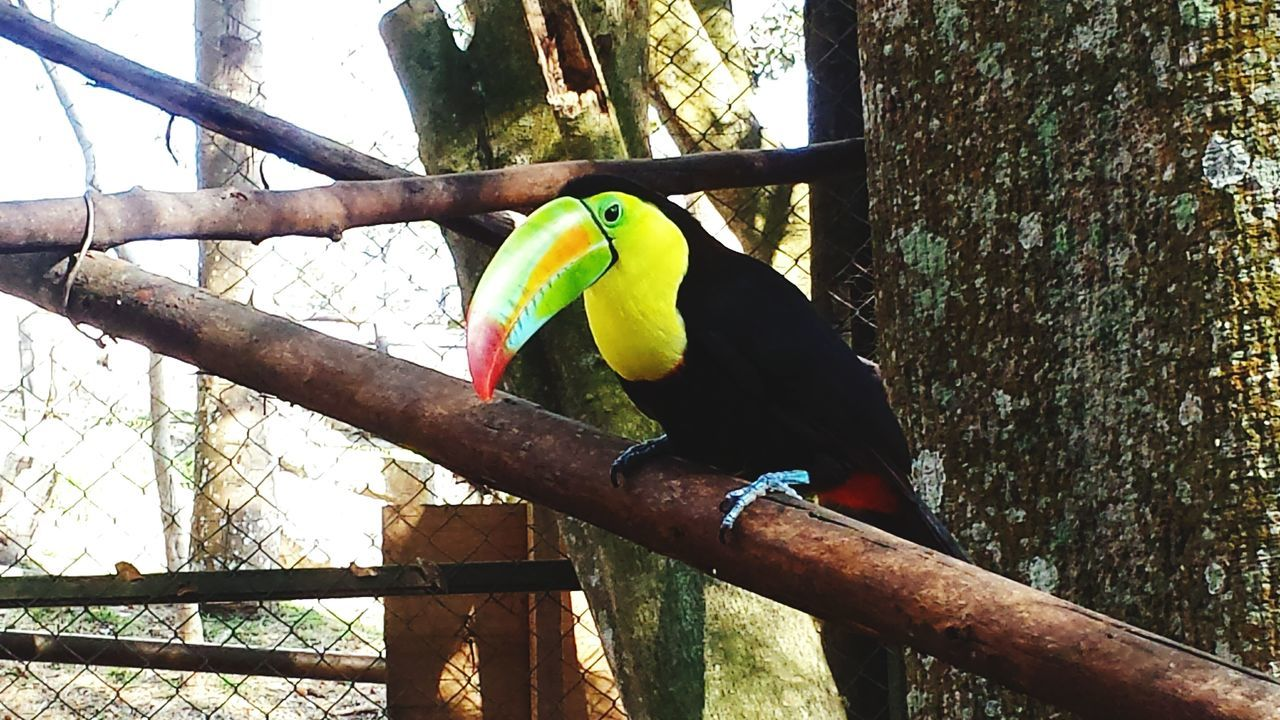 Parrot One Animal Animal Wildlife Bird No People Cellphone Photography Beauty In Nature Beautiful Nature Nature Photography Mobilephotography Cellphonephotography Nature Tucan