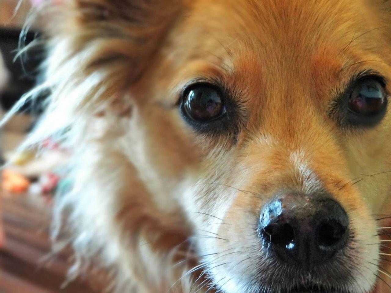 Beautiful stock photos of baer, Animal Hair, Animal Themes, Close-Up, Dog