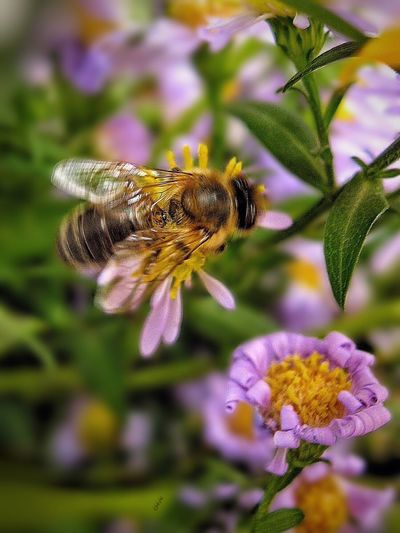 Bee Flight Light And Shadow Nature Photography Summer Nature EyeEm Nature Lover Flower Collection Flowerporn Flowers, Nature And Beauty Flowers,Plants & Garden Flowers Flower In The Garden Macro Light And Shadows Colors Insect Macro Nature Nature_collection Beautiful Macro Photography Macro_collection