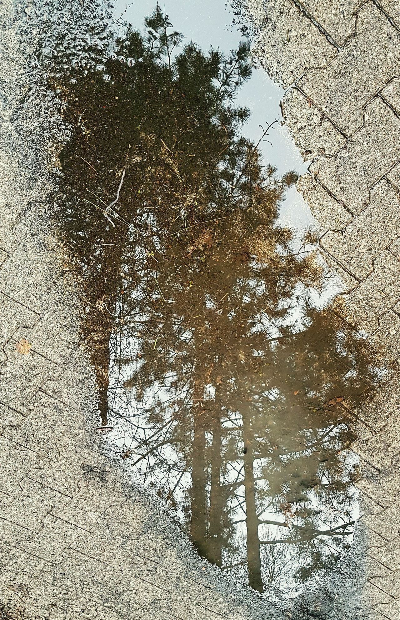 Puddles Trees Reflections Wet Weather Puddle Reflections Puddle Of Rain Aftertherain