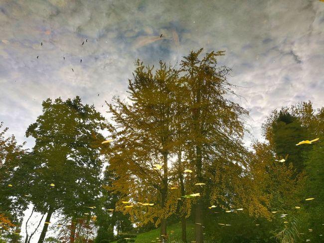 Budapestzoo Nature Tree NatureReflection No People Tree Sky Outdoors