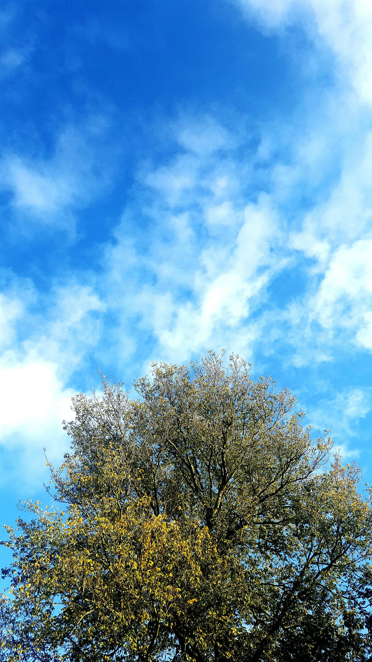 Tree Sky Blue No People Nature Outdoors Beauty In Nature Day Cold Herfst Netherlands Selfmade Pic Netherlands Nature Weather Photography Weather