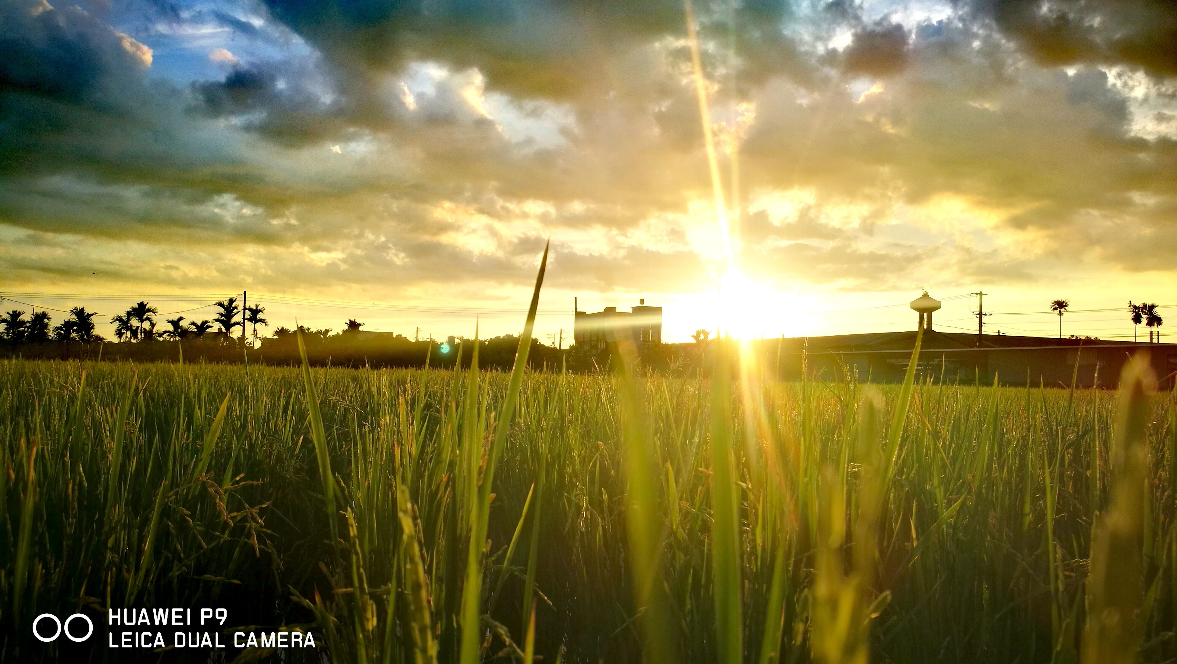 sunset, field, nature, growth, sky, sun, cloud - sky, no people, sunlight, grass, beauty in nature, agriculture, outdoors, scenics, tranquility, tranquil scene, plant, rural scene, cereal plant, day, tree