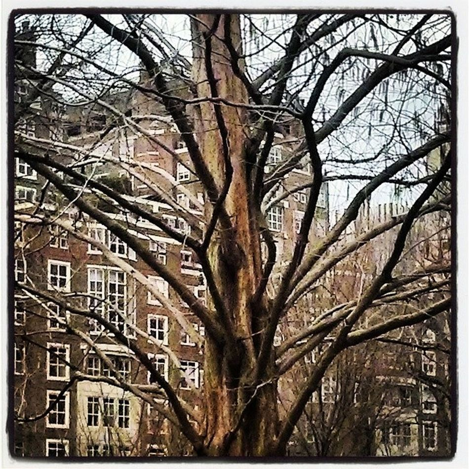Boston Bostonpublicgarden Treelovers
