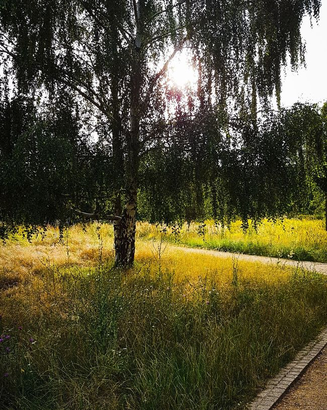 Time for a walk Hanging Out Taking Photos Enjoying Life Relaxing Stanleyreagh No People Berliner Ansichten Beautifulnature Marzahn Outdoors Nature Sunny Day