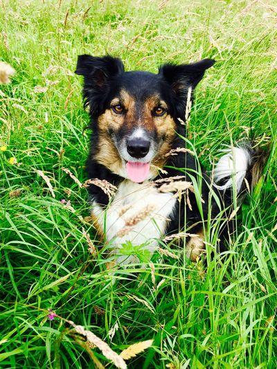 Dog Taking Photos Animals Nature On Your Doorstep Walking Around Pets Field EyeEm Animal Lover