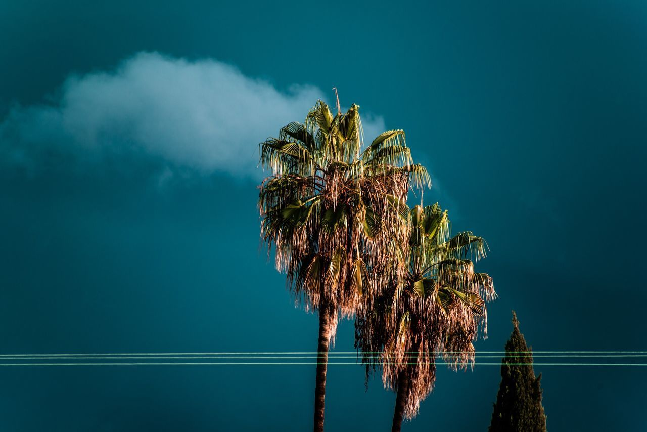 Palms Sky Low Angle View Nature Palm Tree Cloud - Sky Outdoors No People Tranquility Day Architecture Beauty In Nature Tree Cactus Palm Tree