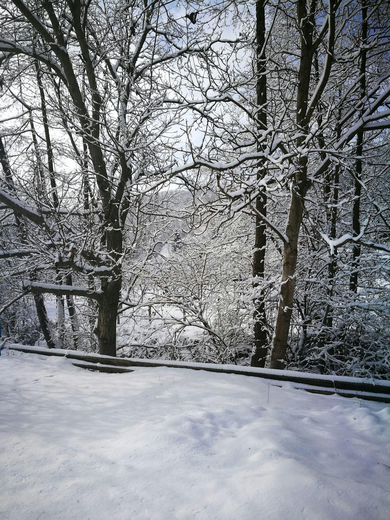 Winter Snow Tree Cotmeana Nature Mountain