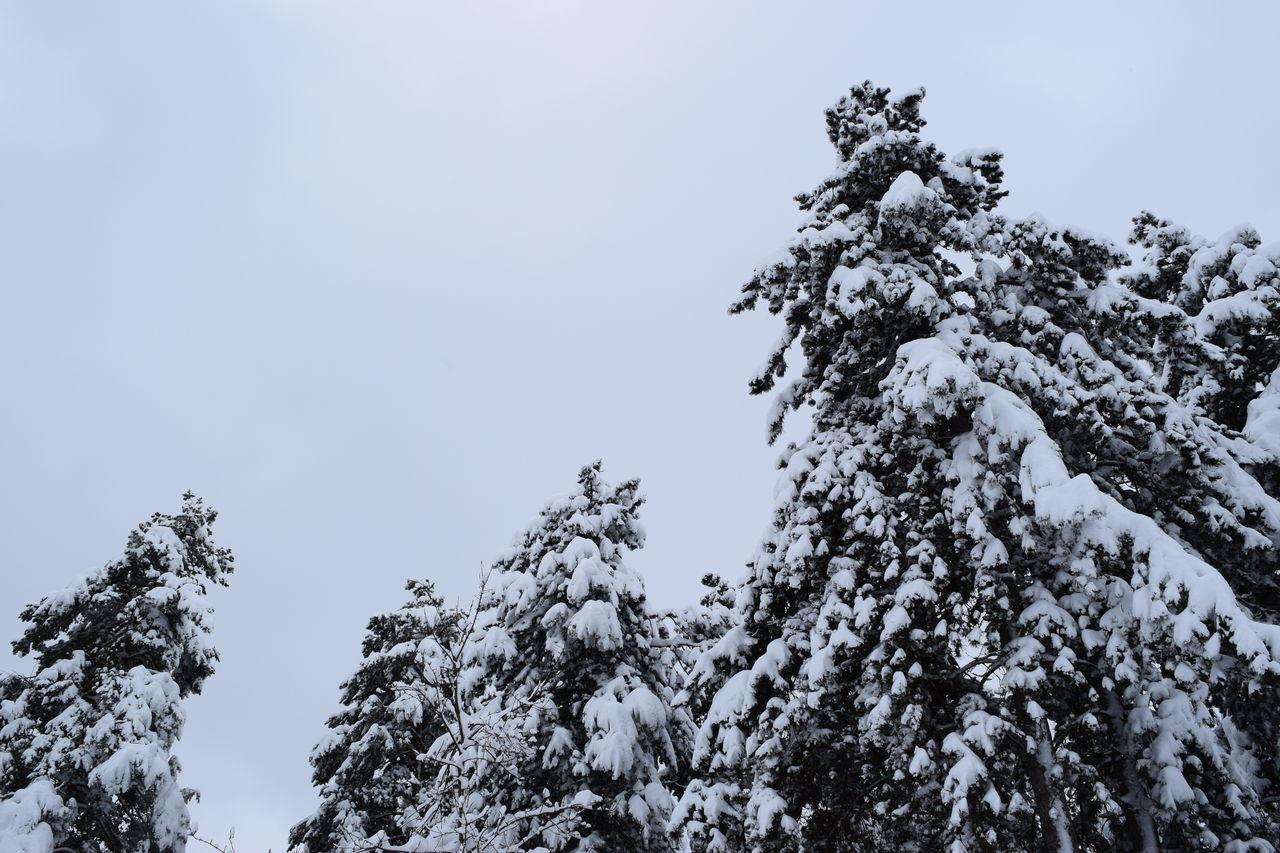 Snow ❄ Winter Wonderland Snowing Cold Days