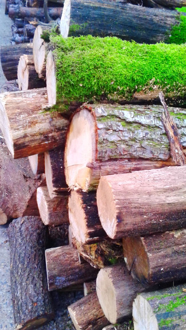 Wood again.. Wood Nature