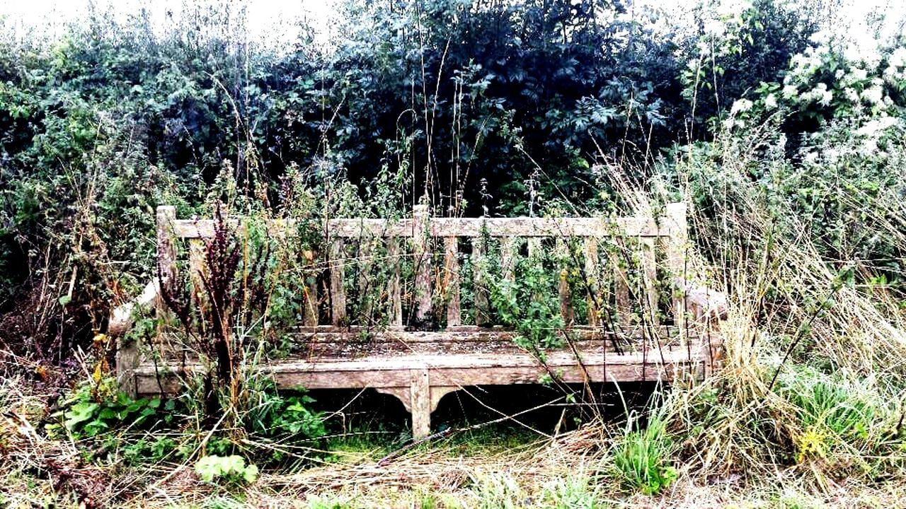 World's Loneliest Bench Neglected Beauty Bench Life I Am Going To Restore This Taking Photos Things You Notice While You're At Work Lonelyplanet Herefordshire Overgrown And Beautiful