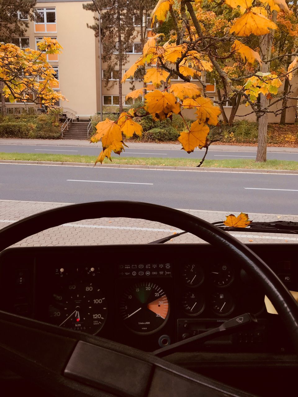 autumn, tree, car, leaf, transportation, orange color, land vehicle, flower, nature, change, day, no people, plant, growth, outdoors, beauty in nature, road, built structure, yellow, architecture, mammal, animal themes, fragility, close-up
