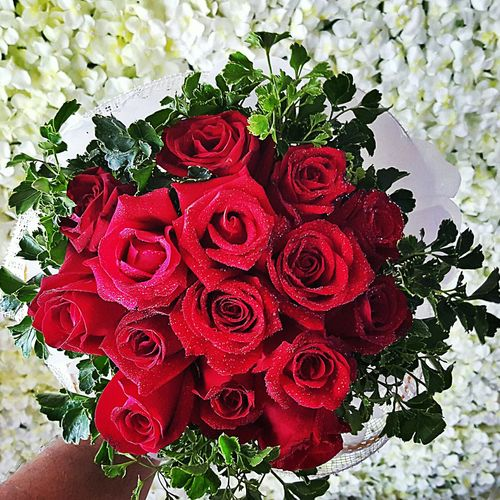 Rose Red Flower Freshness No People Close-up Text Flower Head Day Outdoors