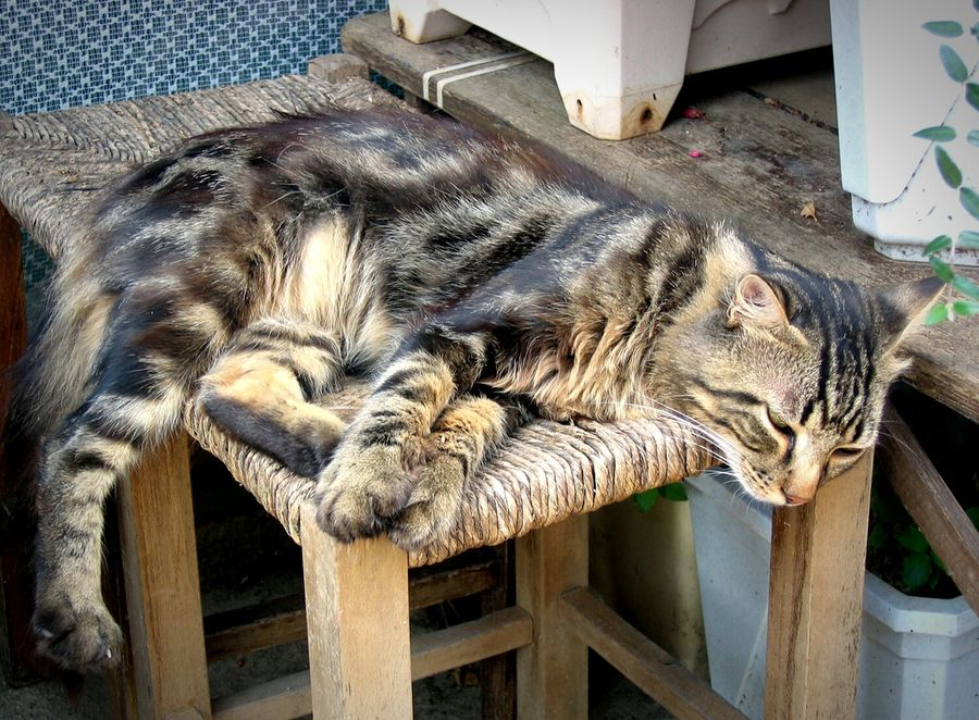 Chilling Cat Asleep Cat Hard Life.. Cat Photography Animal Themes Nap Time Tiger Cat Street Photography Street Cat