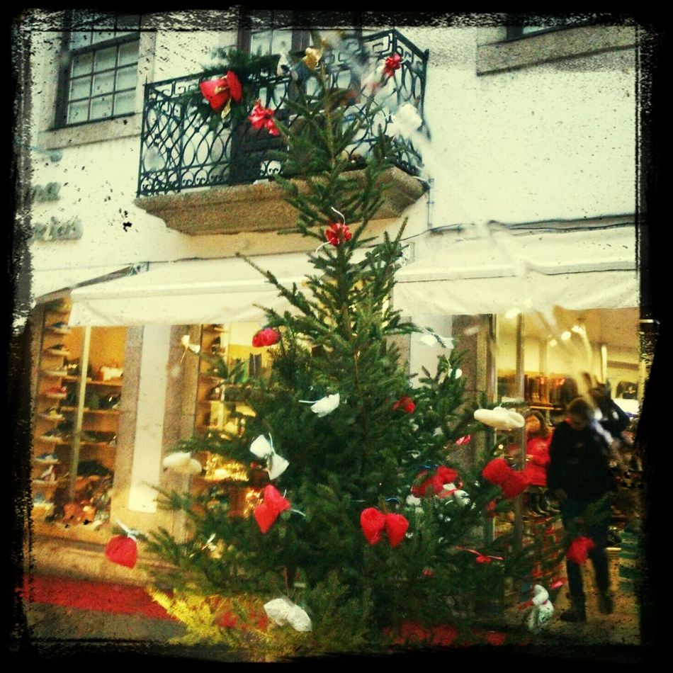 Christmas Tree Light Citylife